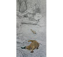Platypus Retreat Photographic Print