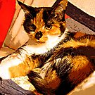 Ginger On her Pillow by hickerson