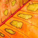 Splotchy Autumn by Belinda Osgood