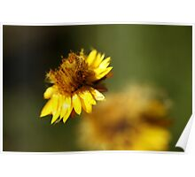 Paper Daisy Set 2/3 Poster