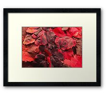 Red Grape Vines Framed Print