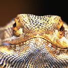 Bearded Dragon by Coloursofnature