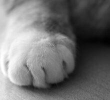Feline Study II - Paw by wwyz