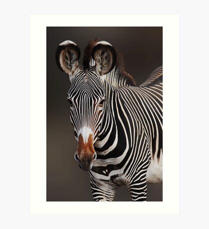 GREVY'S ZEBRA - KENYA Art Print