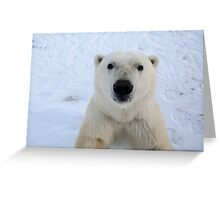 Close Encounter - Polar Bear Portrait Greeting Card
