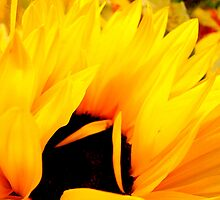 Embracing Petals by Susan Bergstrom