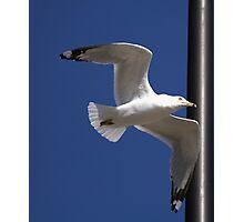 WalMart Seagull Photographic Print