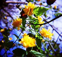 yellow spring by annette andtwodogs