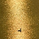 Grebe in the first sun by Yves Roumazeilles