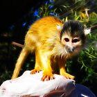 Squirrel Monkey by Nicolas Raymond