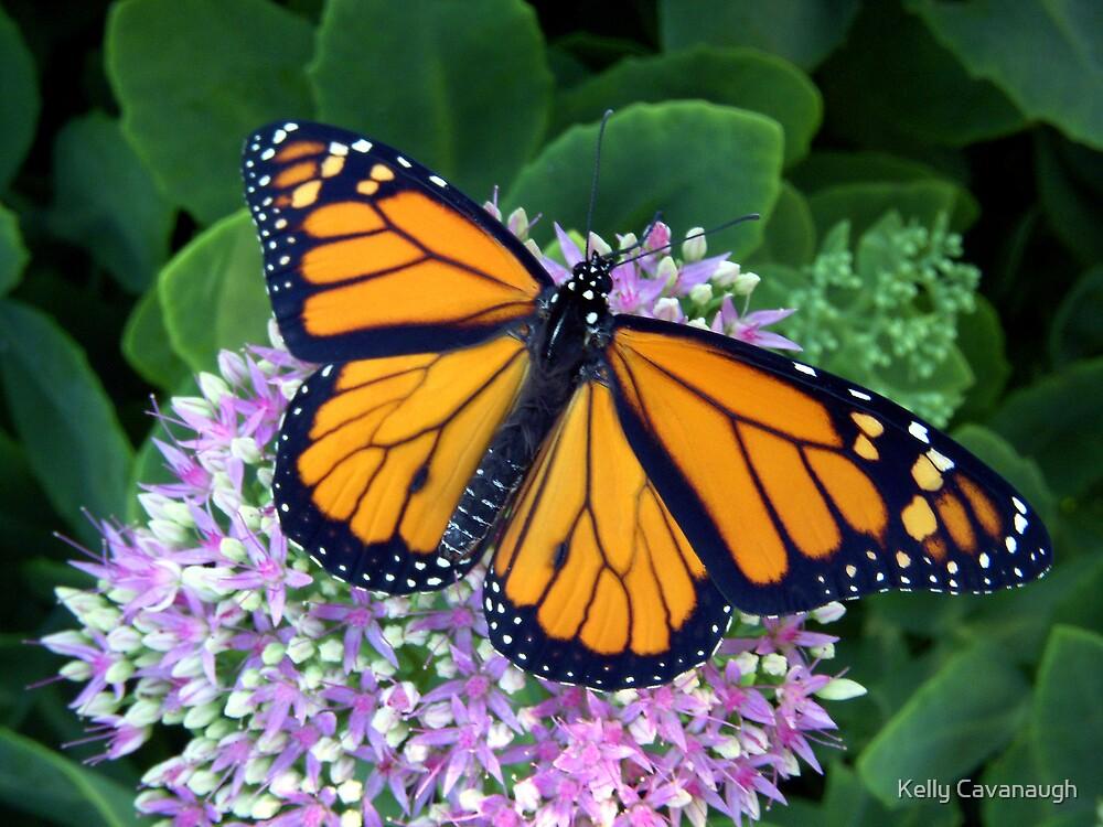 Splendid Symmetry by Kelly Cavanaugh