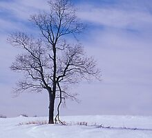 In Winter's Isolation by sundawg7