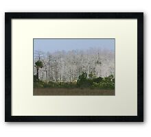 Cypress trees in sunlight Framed Print