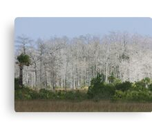 Cypress trees in sunlight Canvas Print