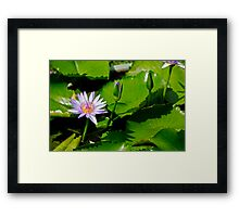 Grand Palace water lilly Framed Print