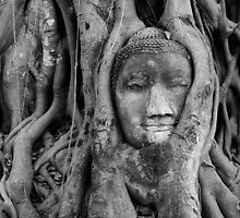 Buddha roots B&W by Kyra  Webb