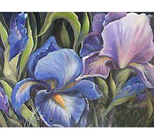 Irises in the wild Photographic Print