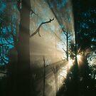 Forest sunrays. by Ern Mainka