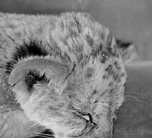 Snooze in B&W by Kyra  Webb