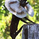 Frill Neck Lizard by Alex Black