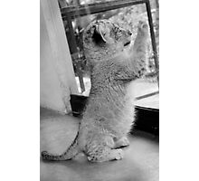 Curious III in B&W Photographic Print