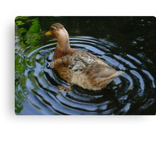 Female Duck Shaking Tail Feathers And Water Ripples Canvas Print
