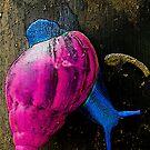 snail by mrfriendly