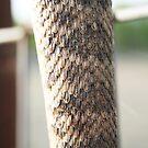 Snake Skin by Cheyenne