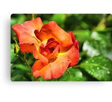 Rain n Rose Canvas Print