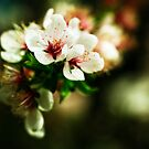 Cherry Flowers by MaShusik