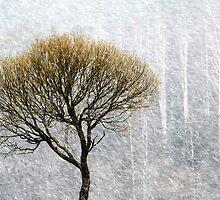 14.4.2015: Lonely Tree in Springtime Blizzard II by Petri Volanen