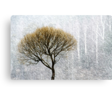 14.4.2015: Lonely Tree in Springtime Blizzard II Canvas Print