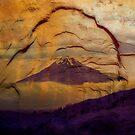 Taranaki by Stephen Johns