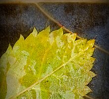 2 Leaves by Dave  Higgins