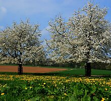 Spring in the Country by Alex Djaferis
