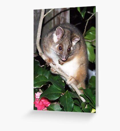 ringtail possum Greeting Card