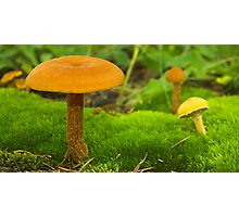 Mushroom Still Life Photographic Print