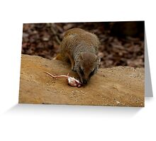 Mongoose and dinner Greeting Card