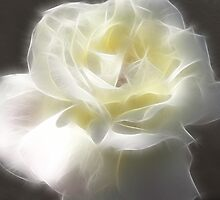 White Rose 2 Macro Angelic by Christopher Johnson