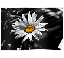 Daisy -Selective Color Poster