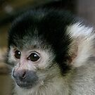 Squirrel Monkey  by Sheila Smith