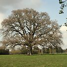 The Mighty Oak by brigusser