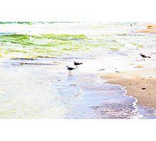 Beach Birds Photographic Print