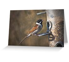 Reed bunting (red list species) Greeting Card