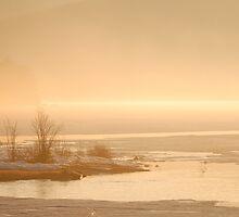 Sun and Fog by Gisele Bedard