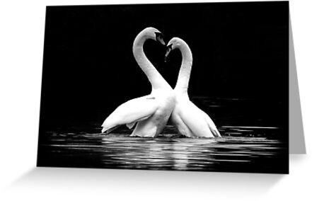 Love (3) by berndt2