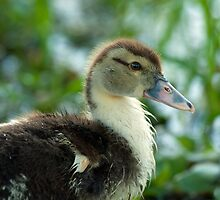 Duckling that's glad to be alive by Bonnie T.  Barry