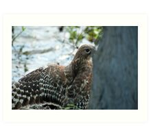 Hawk hiding in the shadows  Art Print
