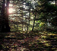 Mossy Woods by dwknight912