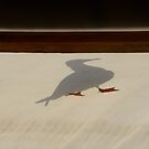 shadow gull by Georgie Hart